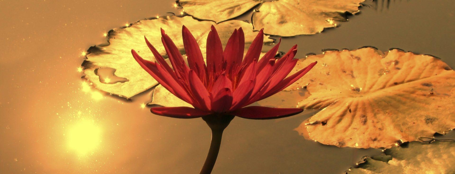 Acceptance & Compassion
